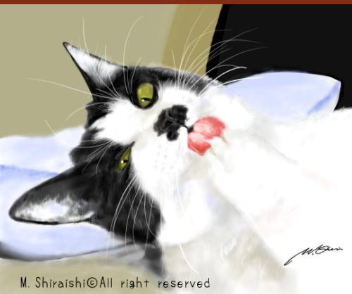 Brog on Cat2018-1.png