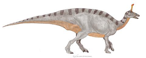 Tsintaosaurus.jpg