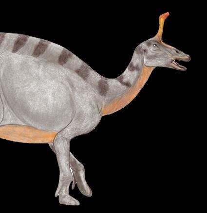 Tsintaosaurus01.jpg