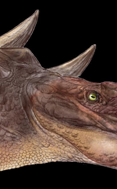 Zhongyuansaurus02.jpg